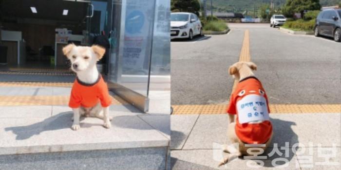4일(금마면 강아지직원 금순이 새옷 선물받다 1)-horz.jpg