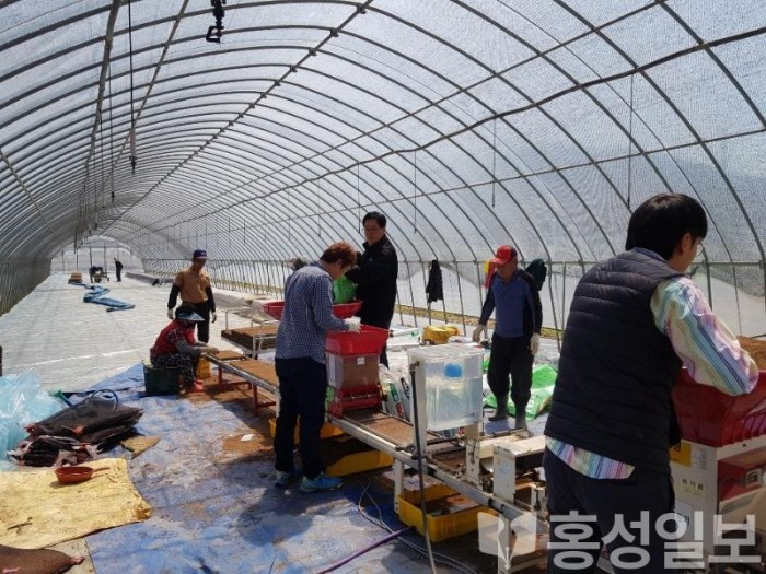 15일 (금마면, 코로나19 극복 위한 농촌일손돕기에 구슬땀).JPG